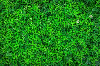 Eco-activité