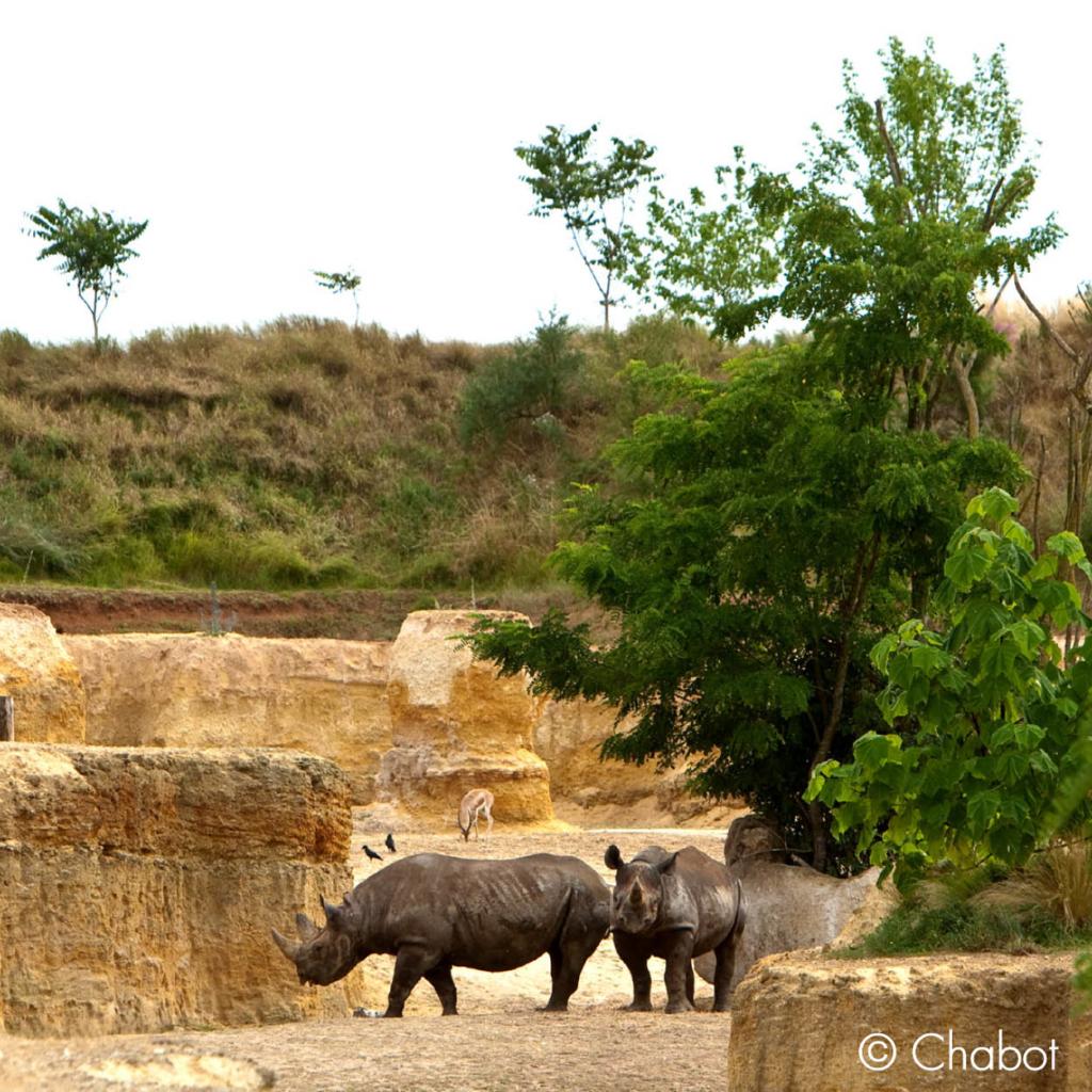 bioparc rhinoceros