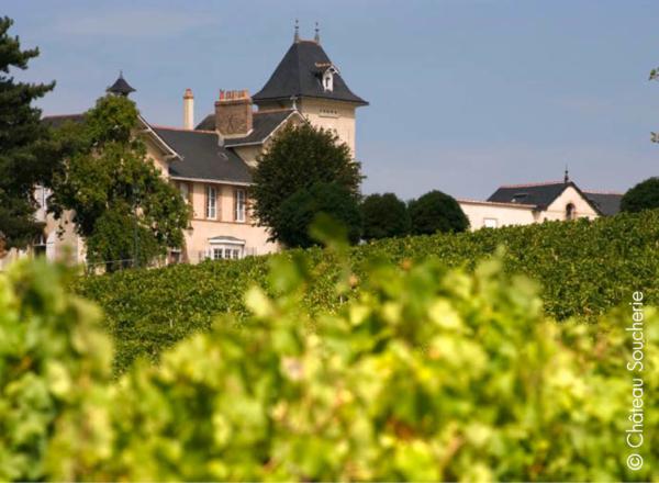 sejour dans les vignes oenologique