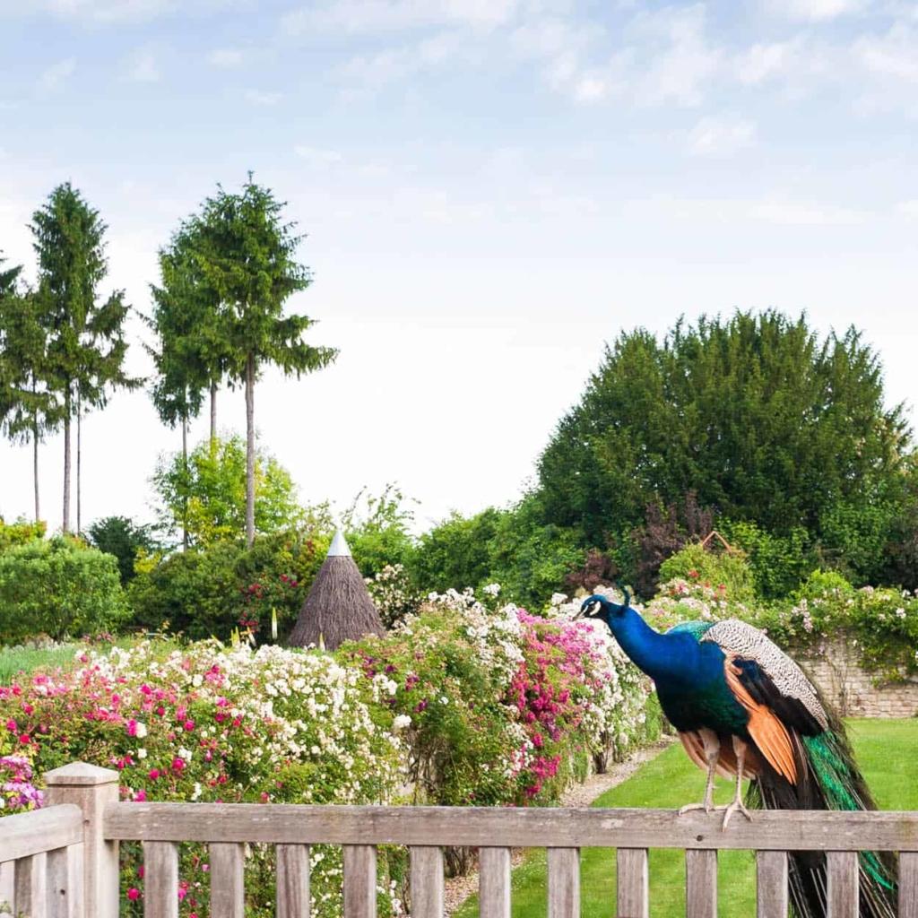 jardins-loire-chateau